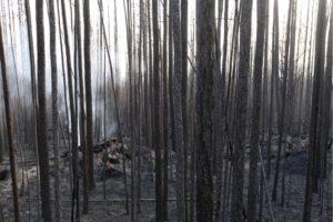 Πυρκαγιές στη Σιβηρία